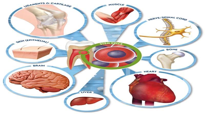 Tế bào gốc trị mụn