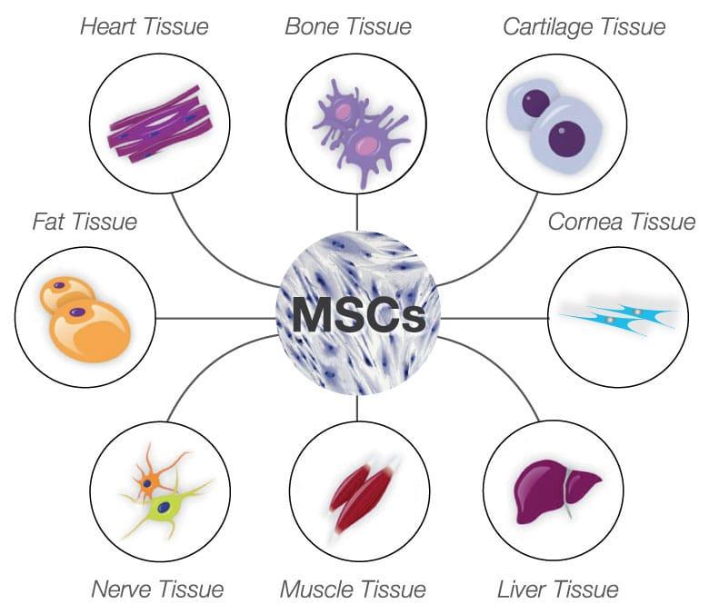 Tế bào gốc bôi da